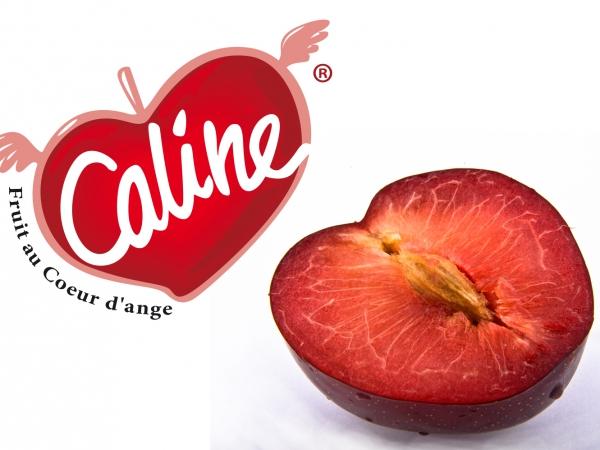 Caline ® – Le fruit au cœur d'Ange